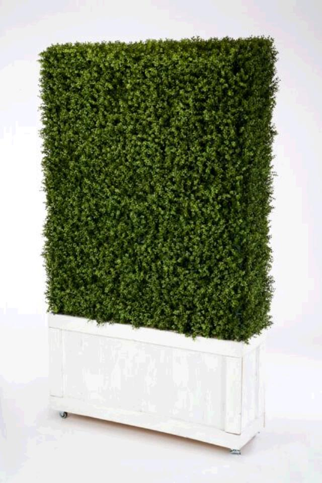 Where to find 4  x 8  BOXWOOD HEDGE in East Bay