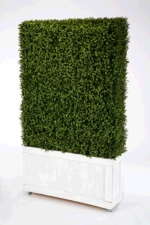 Rental store for 4  X 8  Boxwood Hedge in East Bay CA
